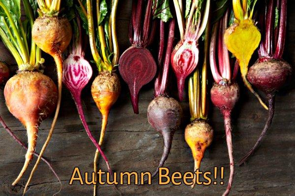 fall_beets
